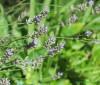 Journées des Plantes d'Albertas 2021, Bouc-Bel-Air (13)